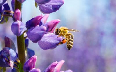 Déclarez vos ruches jusqu'au 31 décembre